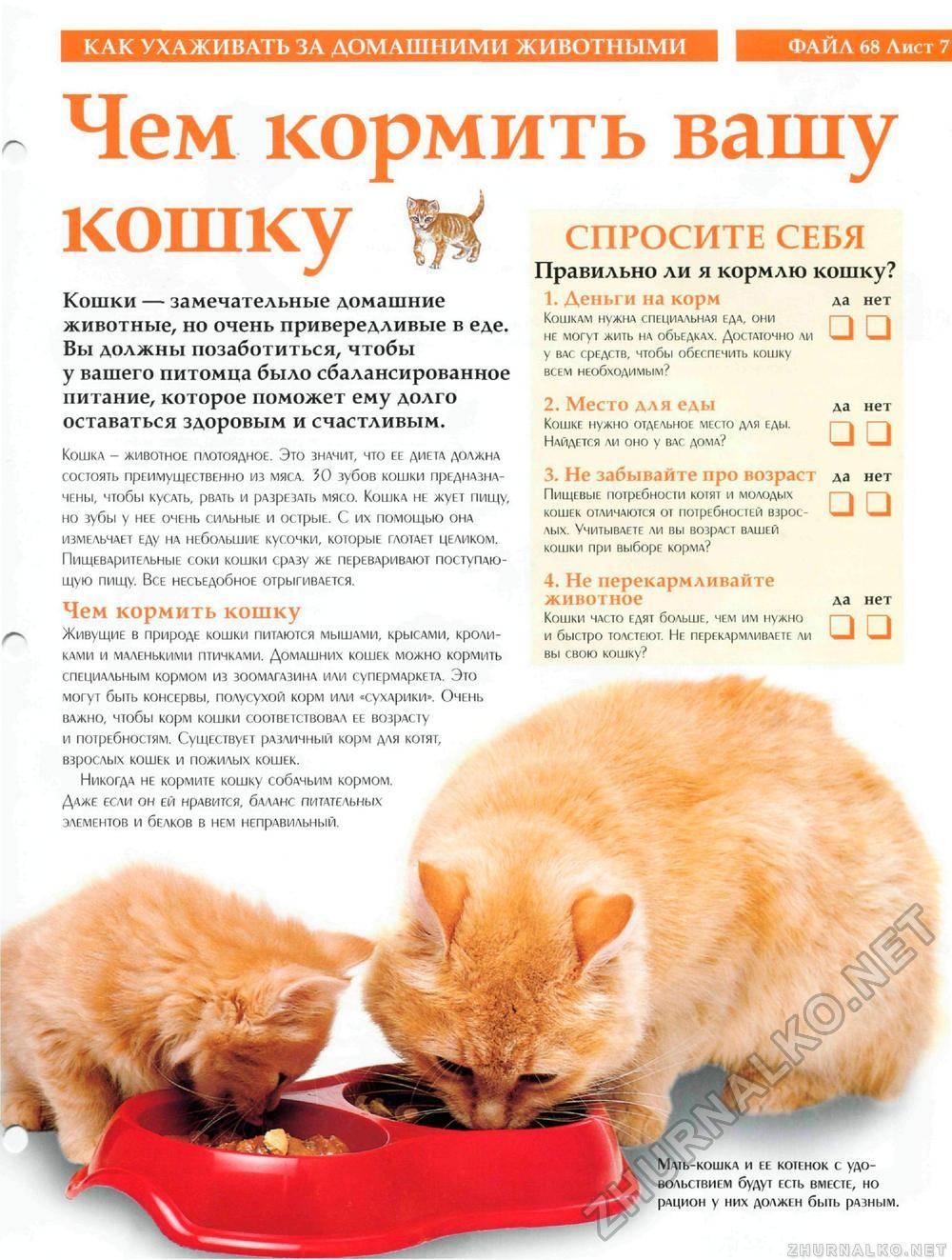 Как правильно ухаживать за котенком?