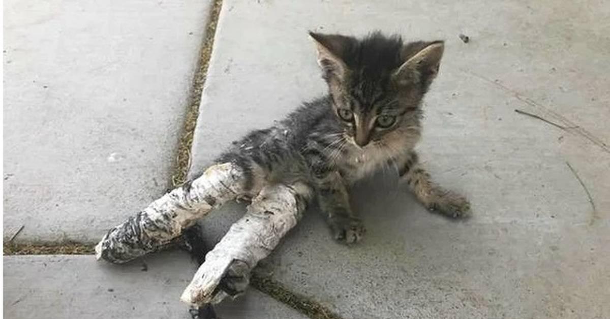 Почему кошки пинаются задними лапами