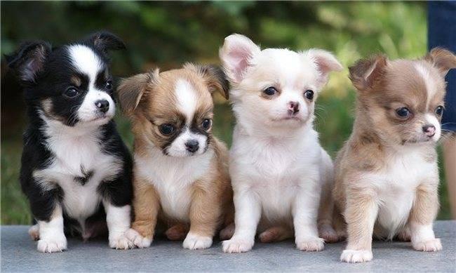 Имена для собак девочек 2020 красивые клички, легкие, маленьких и больших пород, значение щенка