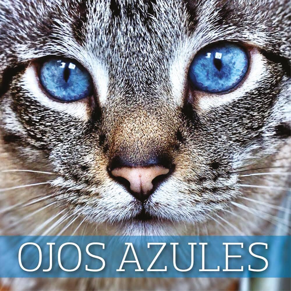 Охос азулес: фото, описание, характер, содержание, отзывы