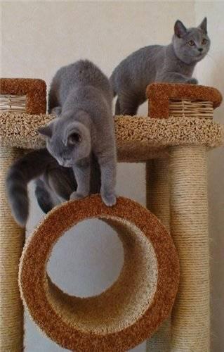 Варианты приучения котят к когтеточкам: примеры как быстро научить питомца