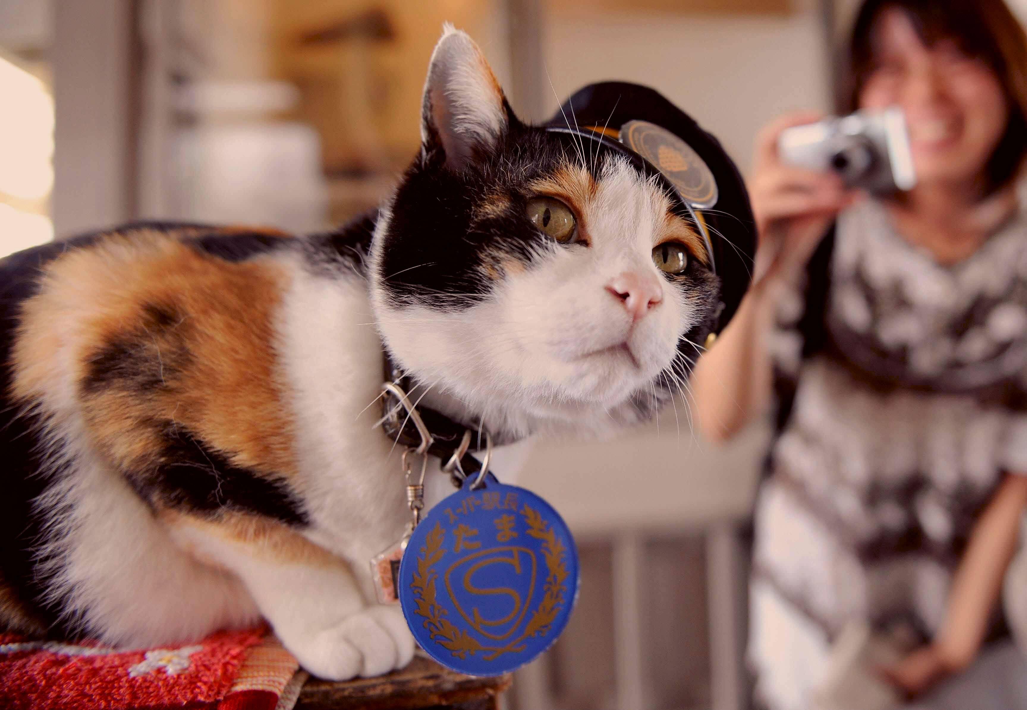 Тама — кошка-самурай и начальник станции, спасшая японскую железную дорогу