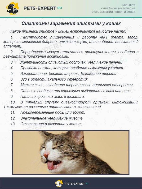 Гельминты у кошек фото с названиями