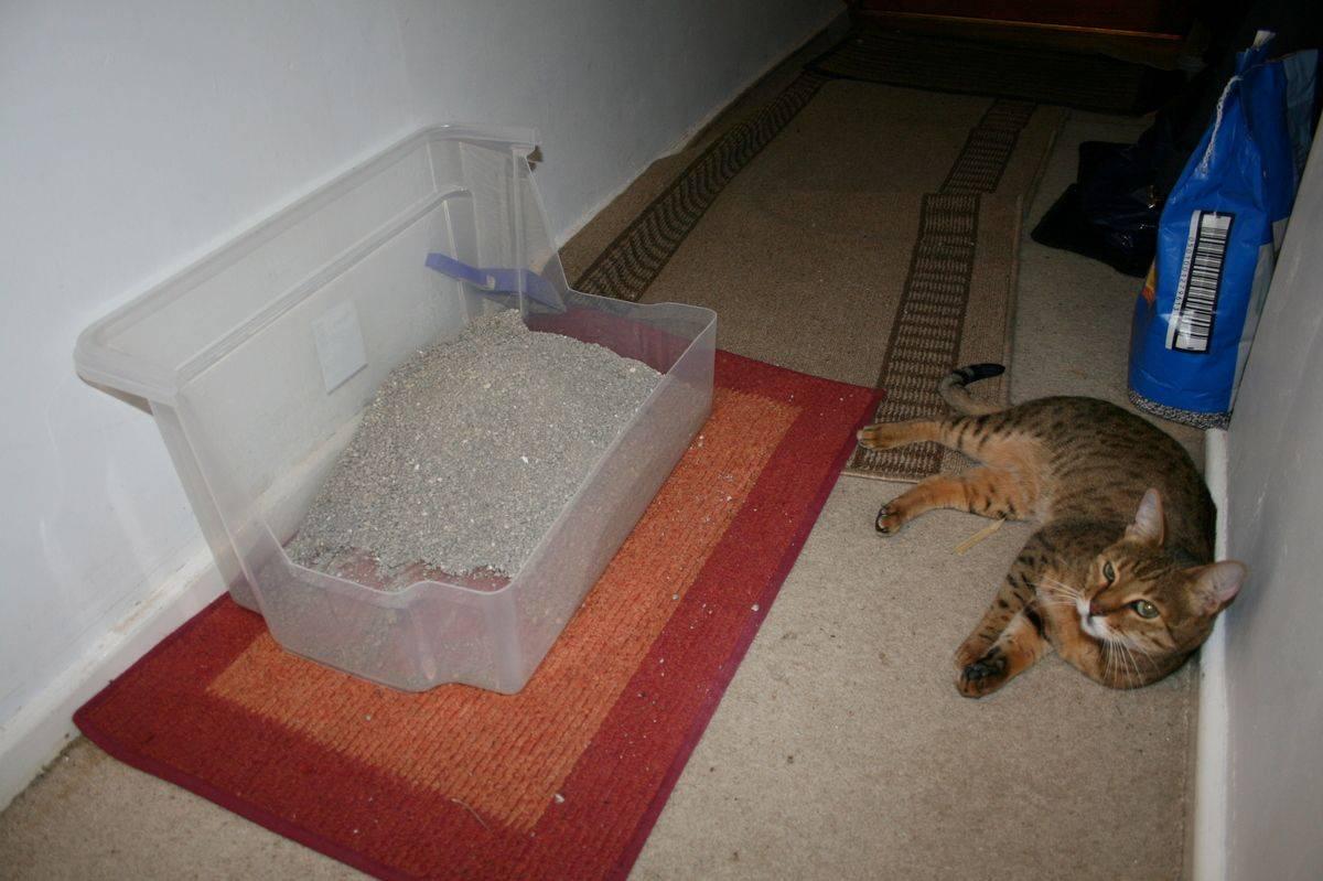 Как отучить кошку гадить внеположенном месте: причины проблемы, как перевоспитать животное ивывести запах народными средствами ибытовой химией