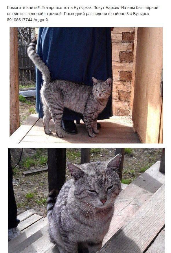 Пропал кот... к чему это?