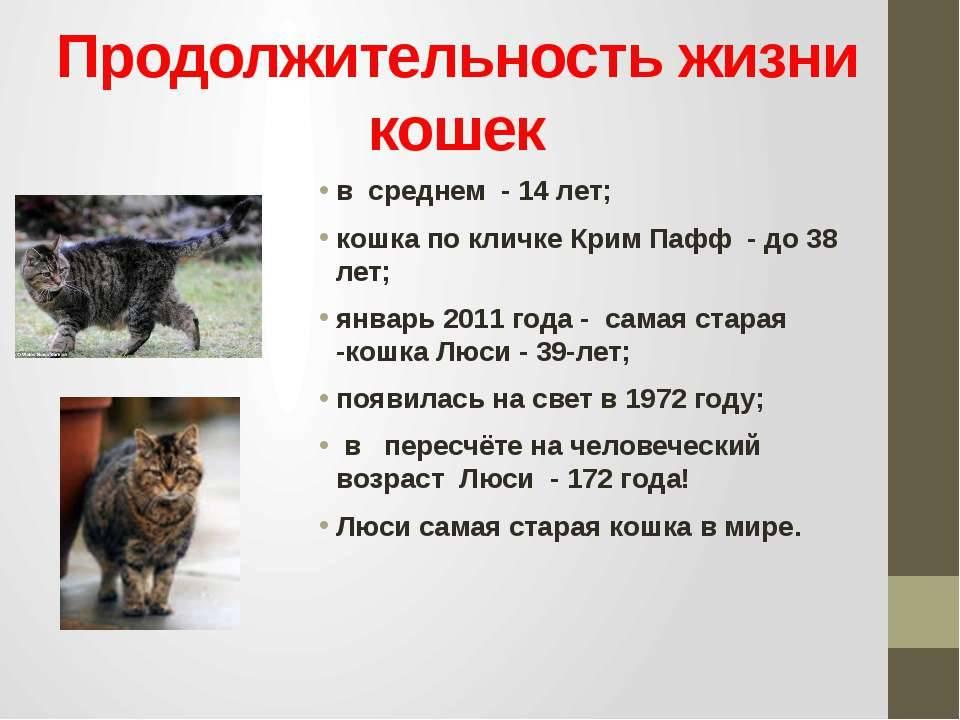 Самая старая кошка в мире: рекордсмены, причины, породы