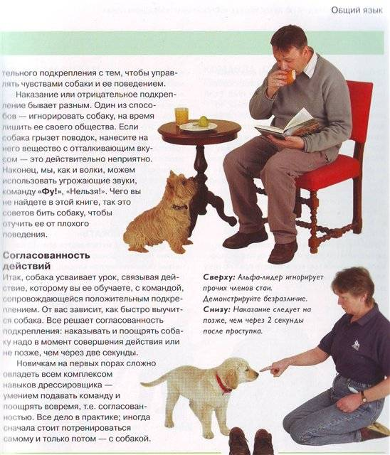 Дрессировка собак в домашних условиях: особенности, правила