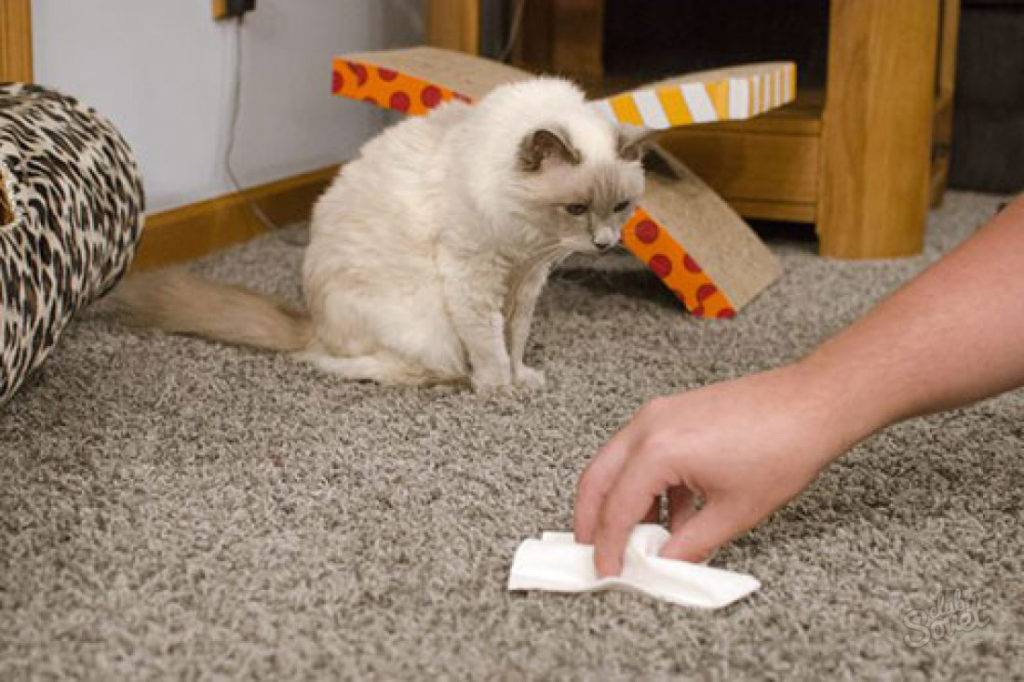 Кот начал писать где попало что делать? - love cats
