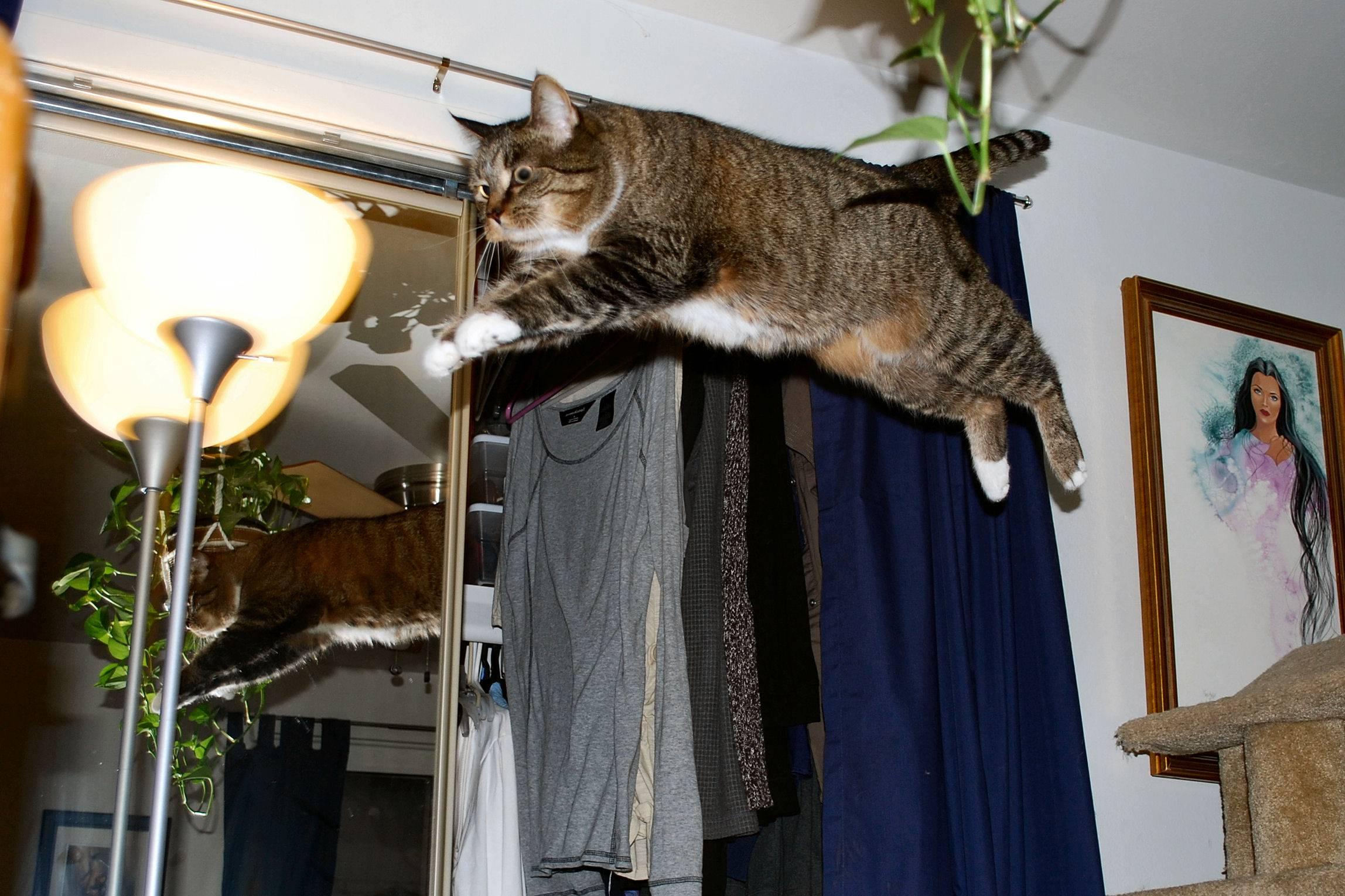 Кошка мяукает: какие звуки, что значат, как отучить бегать и мяукать по ночам, что означает беспокойное поведение?
