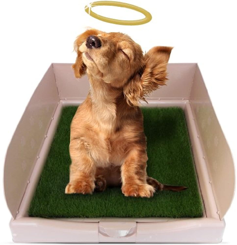 Как приучить щенка к улице после пелёнки: как отучить собаку ходить в туалет дома, зимой и летом, чихуахуа, йорк, мопс, шпиц, спаниель и другие породы