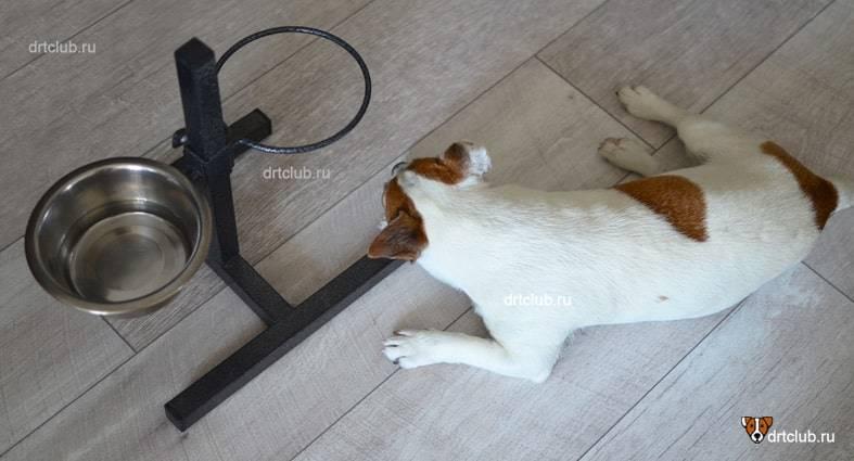 Если собака перестала пить воду