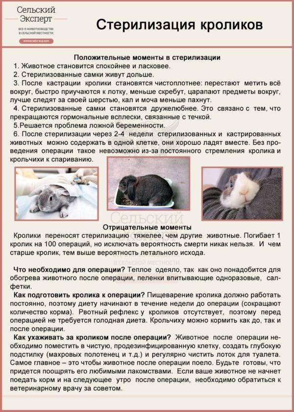 Беременность и окот кроликов — сроки вынашивания и другие особенности
