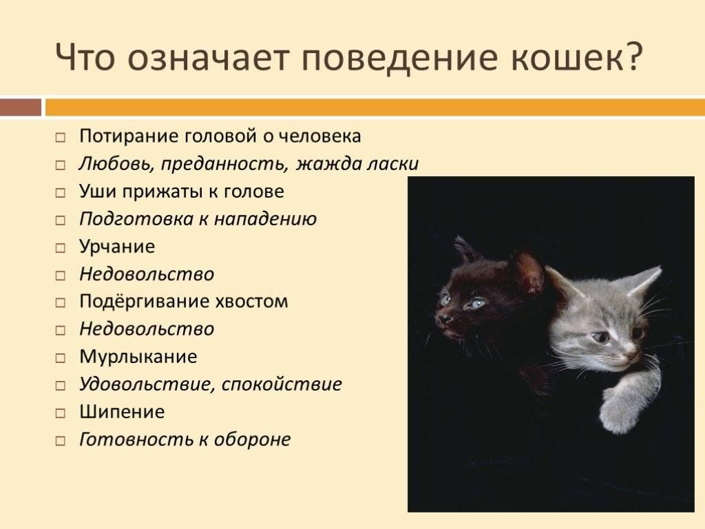 Почему кошка мурлычет?