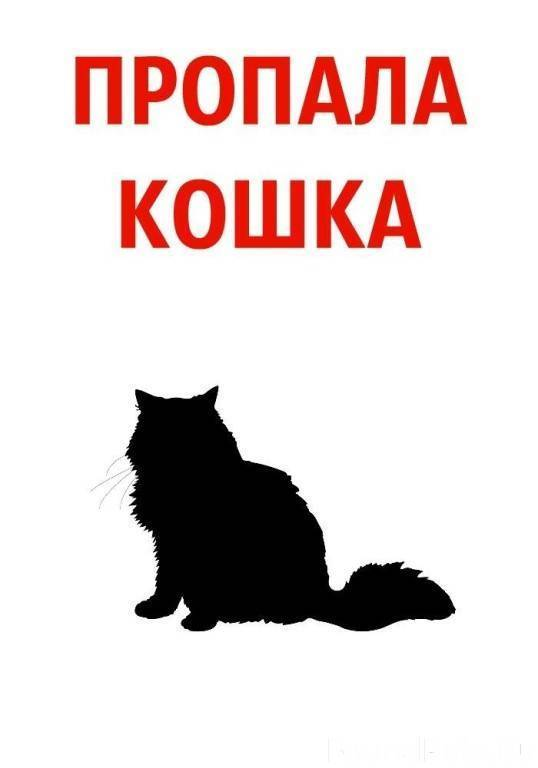 Что делать если потерялась кошка: действия и советы что делать если потерялась кошка: действия и советы