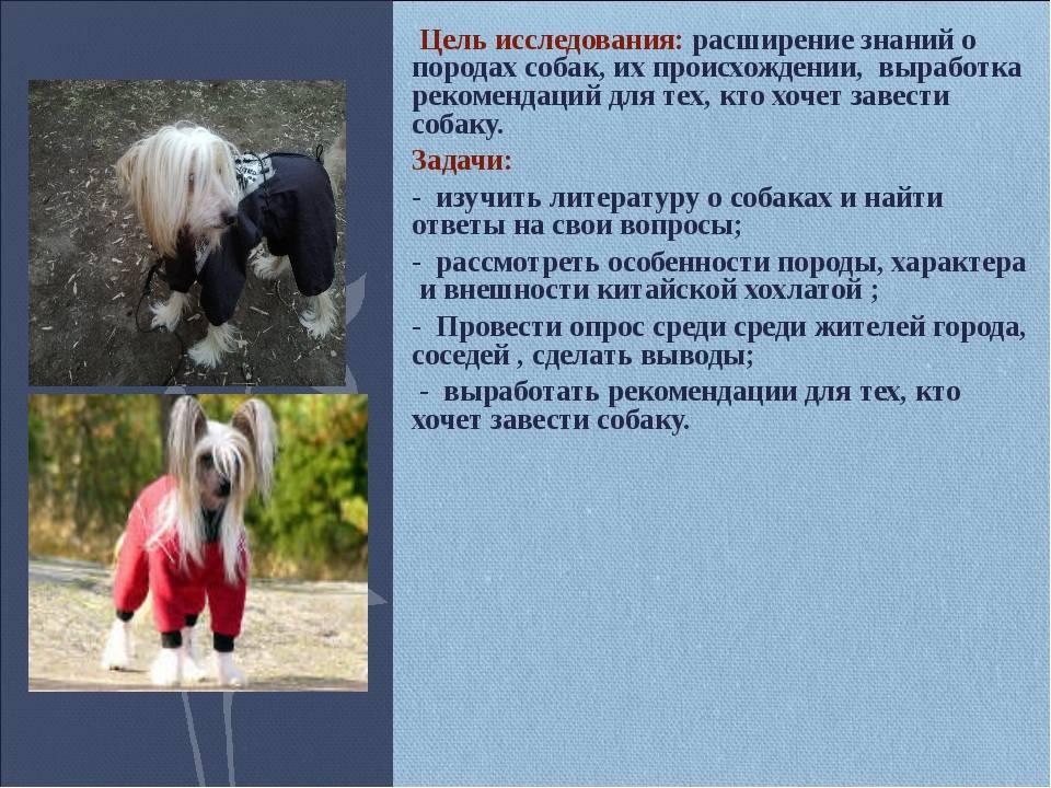 Аборигенные породы собак: список, группы, особенности и основные характеристики