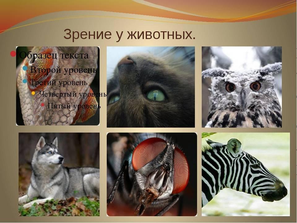 Как выглядит окружающий мир глазами собаки: особенности зрения у животных