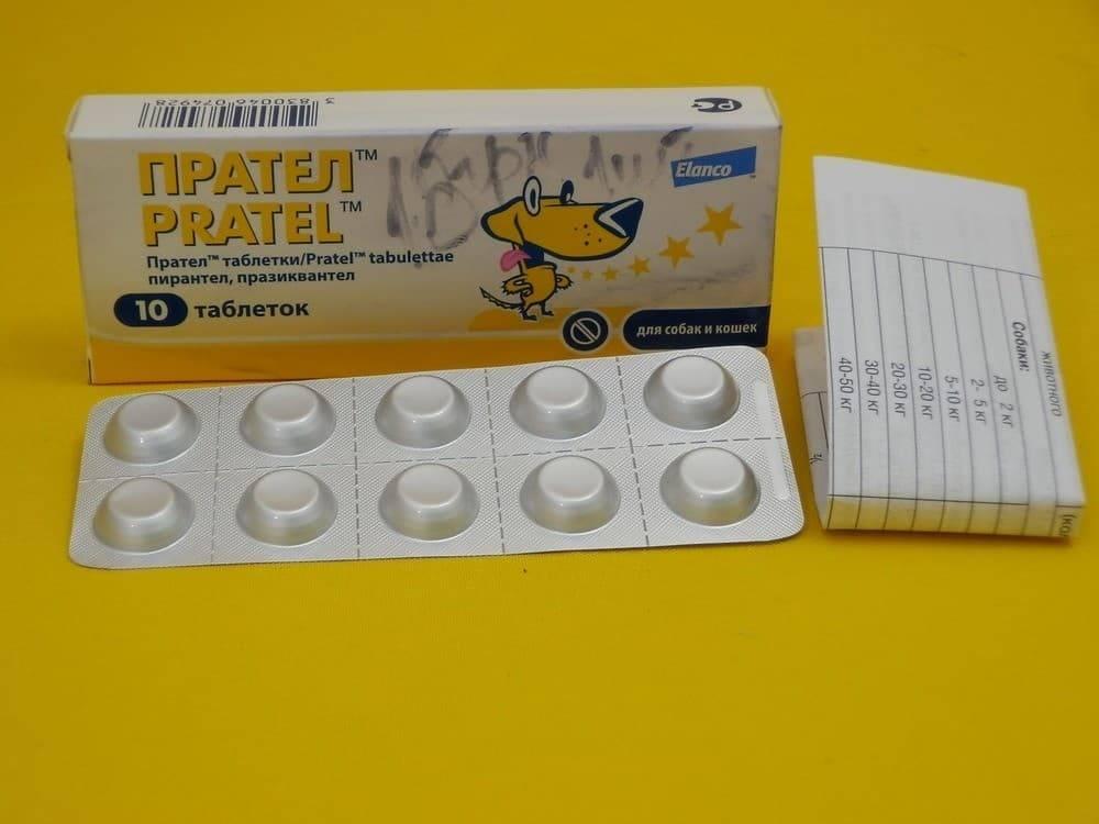 Боремся с паразитами при помощи препарата прател для собак!