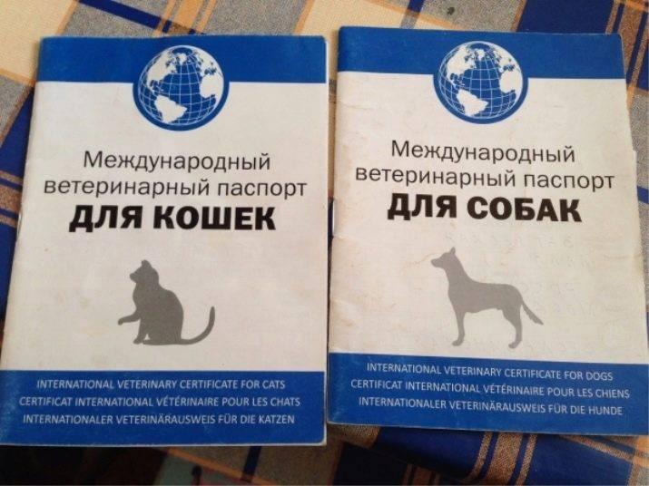 Ветеринарный паспорт для кошки