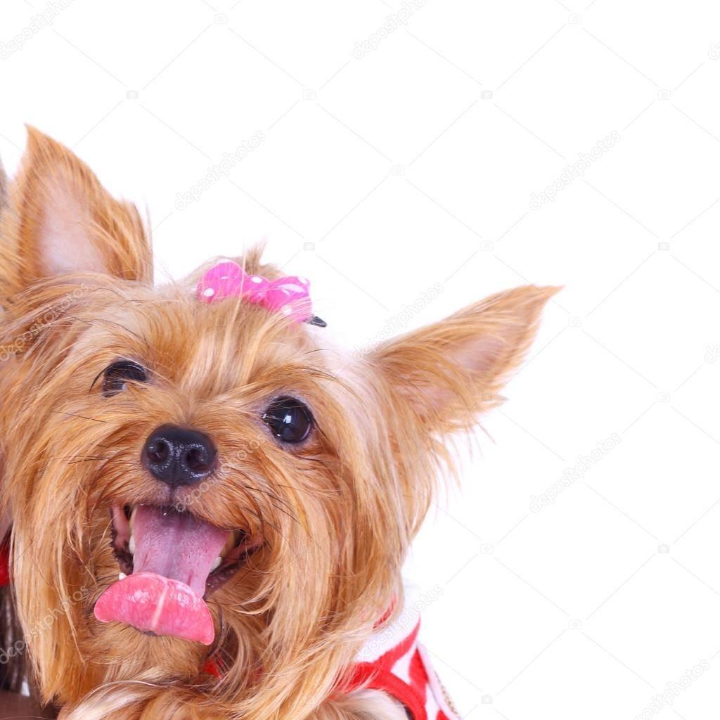 Собака дрожит и трясется - причины и что делать?