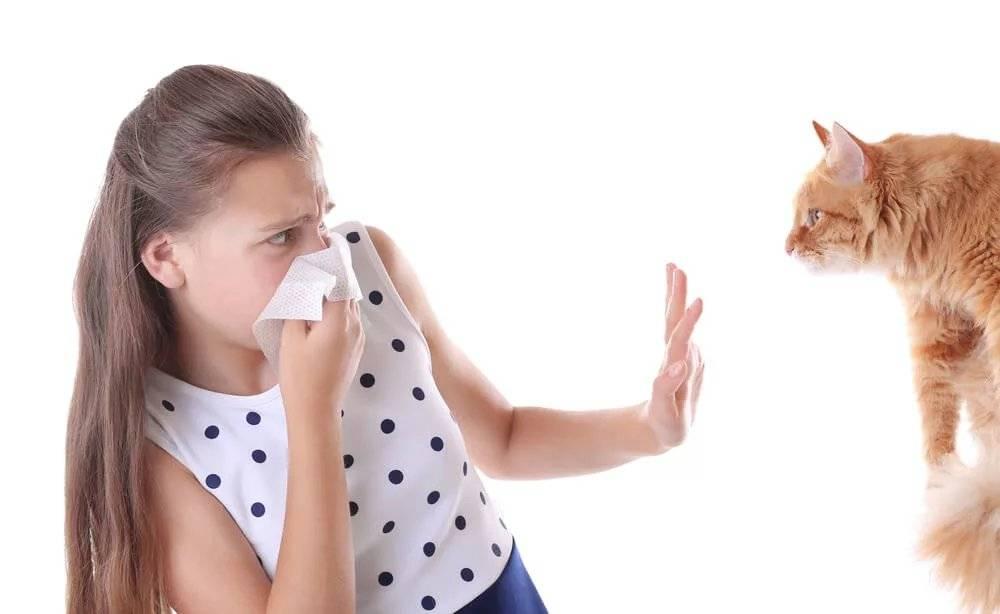 Как справиться споллинозом иможноли вылечить аллергию накотов: аллергологи отвечают навопросы