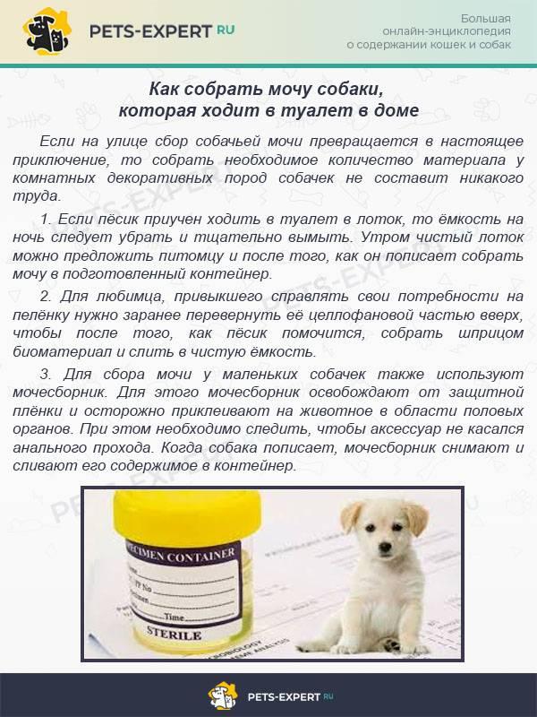 Собака писается ночью: естественные причины и возможные заболевания