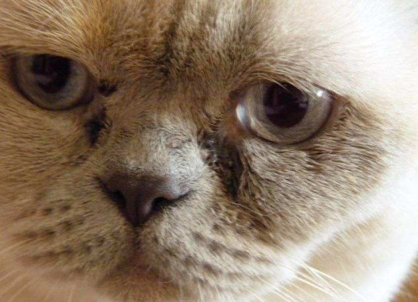 У кошки слезится один глаз: что делать?
