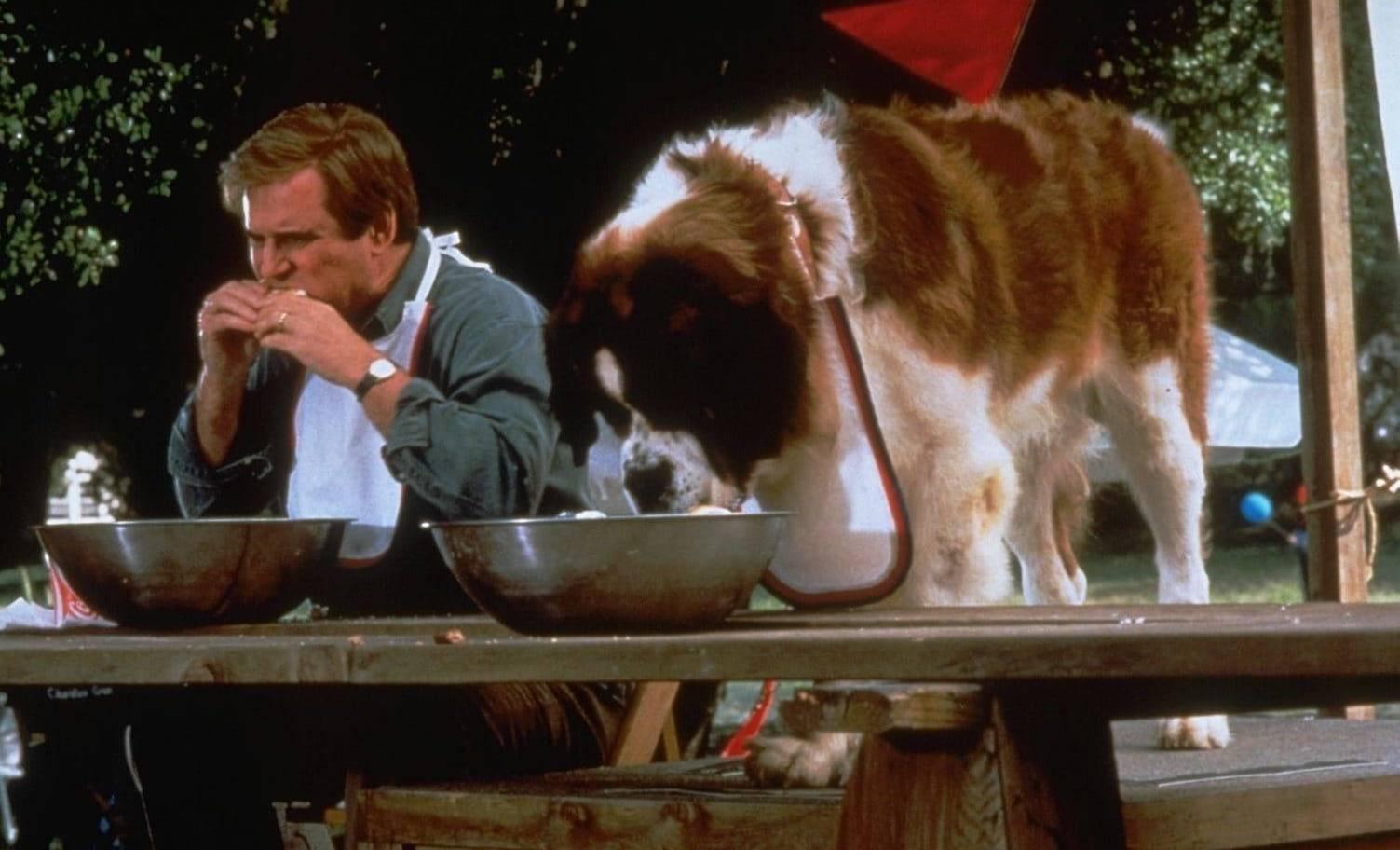 Обзор породы собак сенбернар - главной киногероини по кличке бетховен