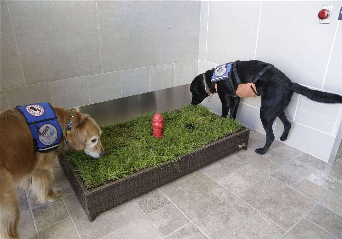 Приучение щенка к туалету в квартире