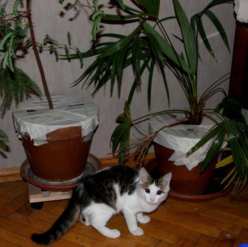 Как отучить кошку грызть цветы — все способы от а до я