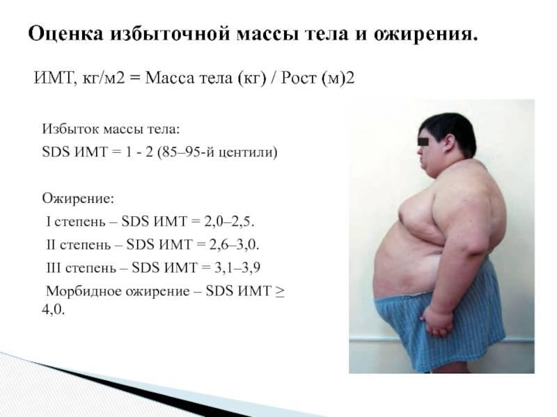 Толстый кот: сколько весят самые жирные кошки