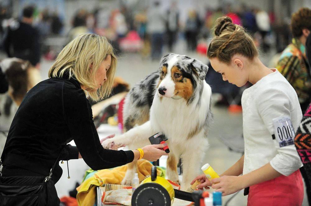 Zooпортал.pro :: international dog show cacib – fci / интернациональная выставка собак cacib – fci г. ростов-на-дону
