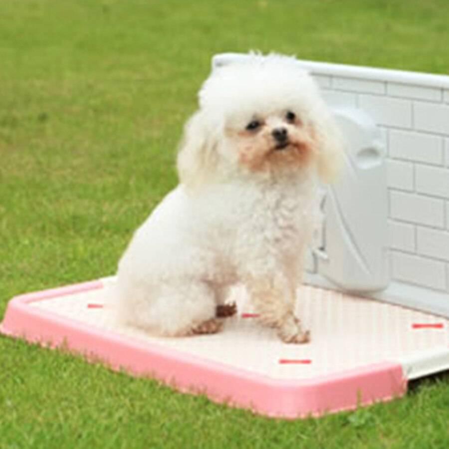 Туалет для собак: как выбрать лоток и приучить к нему питомца
