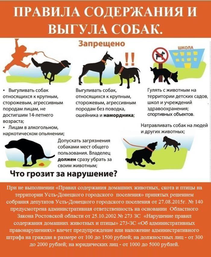 Православное животное. почему кошкам в храмах рады, а собакам — нет