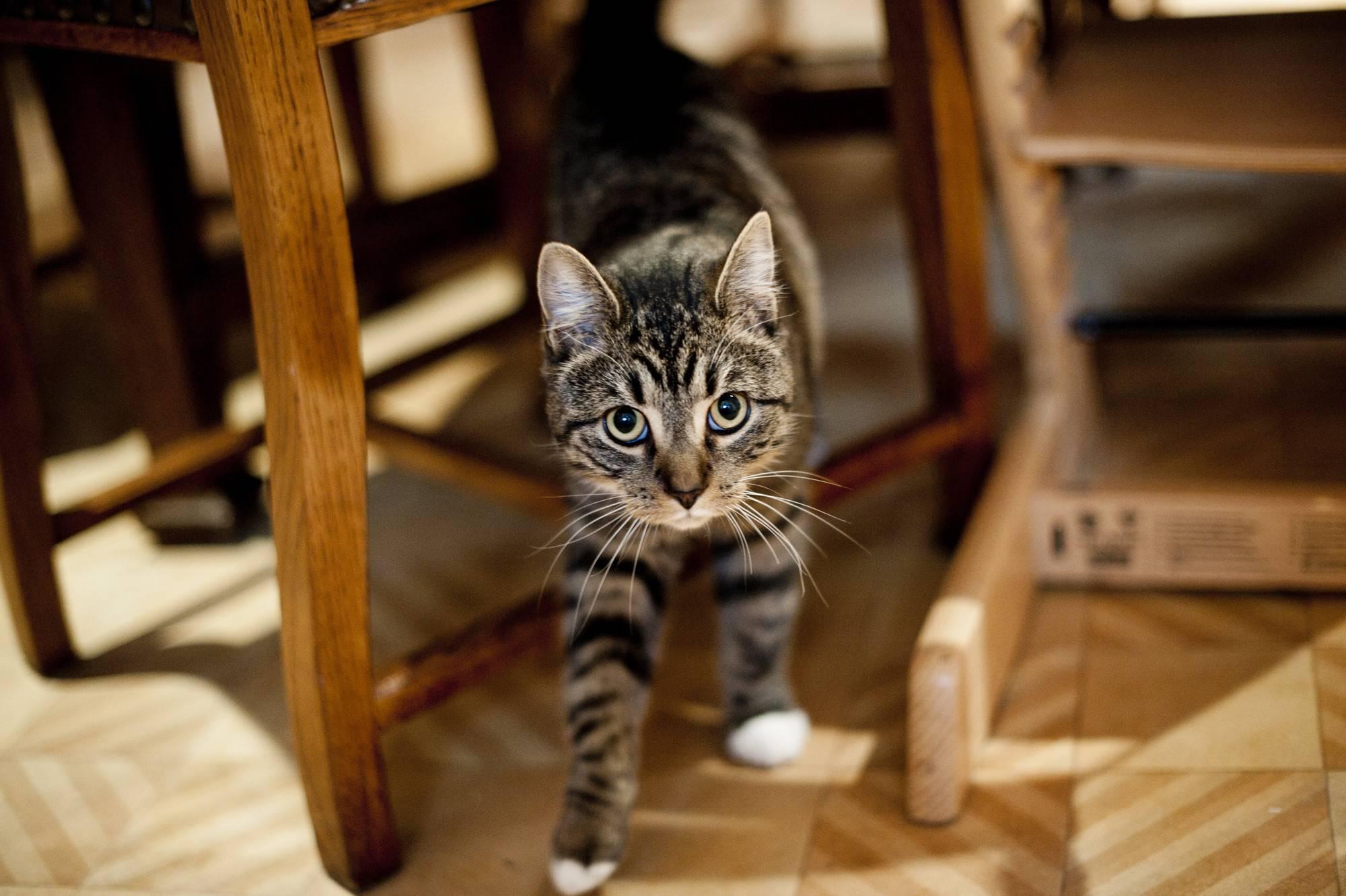 Что сделать, чтобы коты не метили входную дверь? чем ее обработать, чтобы отпугнуть своих и соседских кошек?