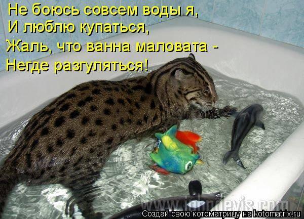 Породы кошек, которые не боятся воды