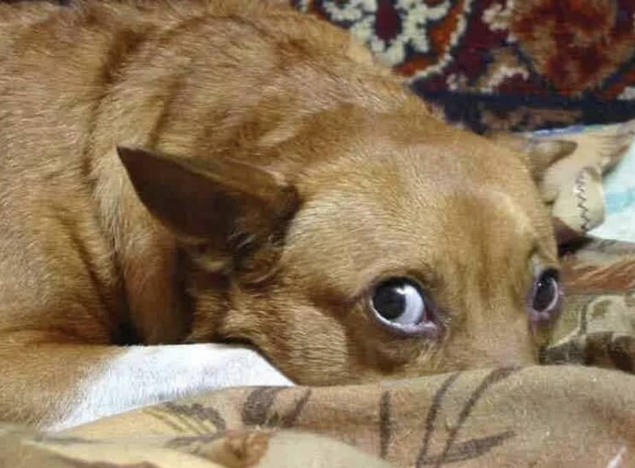 Как попросить прощение у собаки, если сделал ей больно