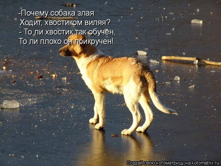 Причины поведения собаки, когда она бегает за своим хвостом