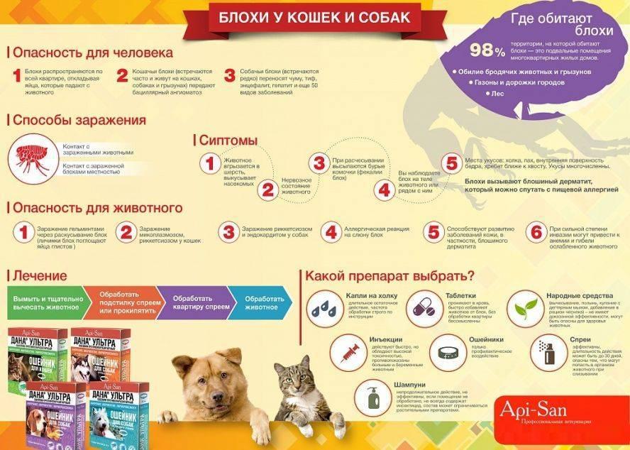 Как ухаживать за собаками - презентация
