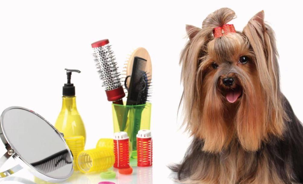 Как ухаживать за хаски. советы ветеринара по дрессировке и уходу за хаски.