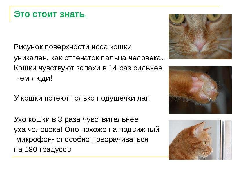 Почему кошка нюхает нос человека: странности кошачьего поведения