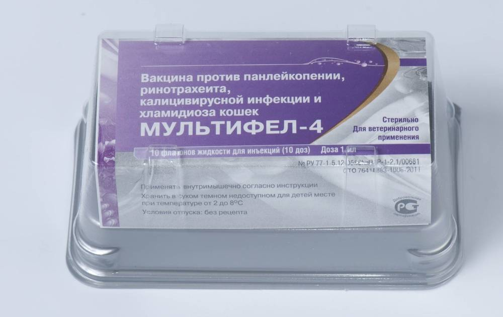 Фелоцел: вакцина для кошек от опасных инфекций