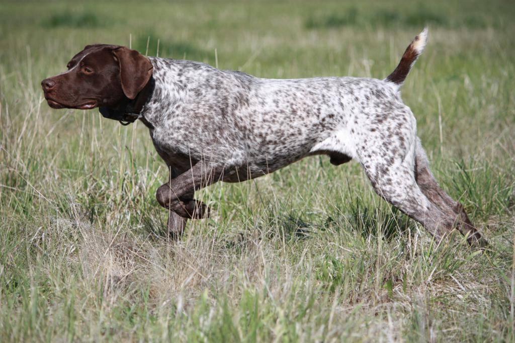 Норные породы собак — фото с названиями, описание охотничьих качеств