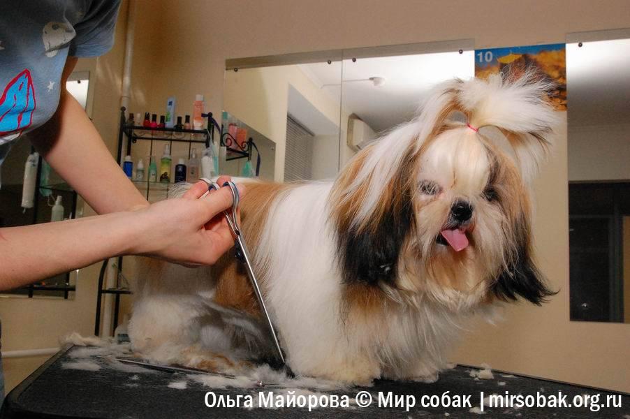 Каких собак нельзя стричь