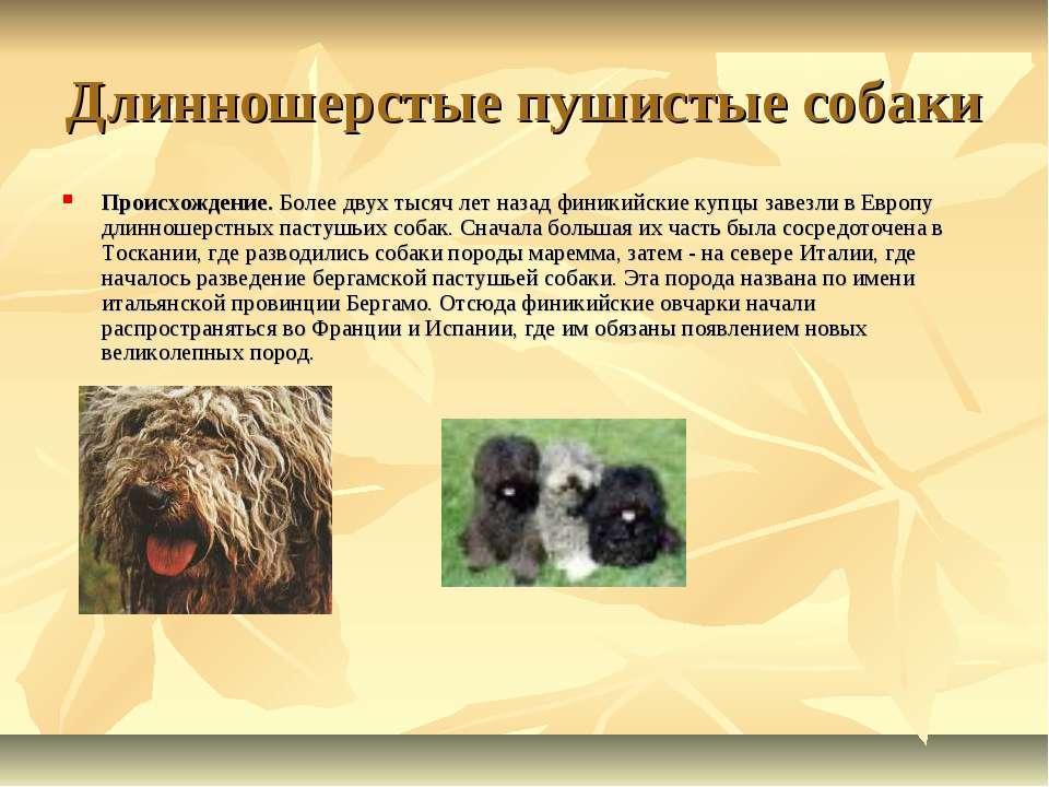 Древнейшие породы собак. 10 старейших или самые древние породы собак в мире. - petstime.ru