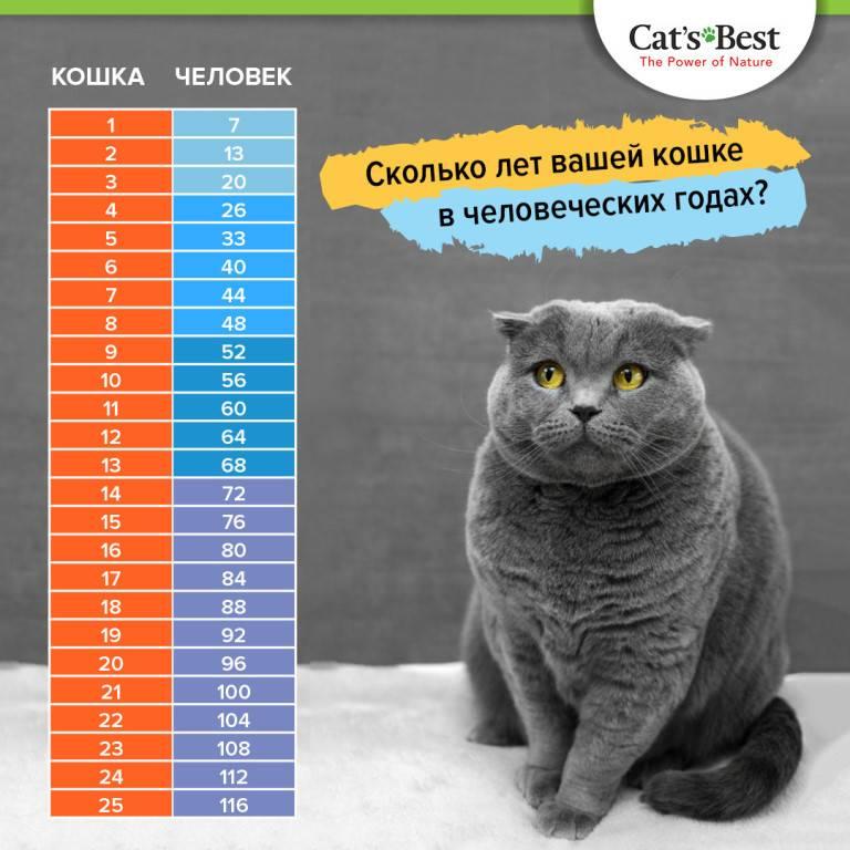 Продолжительность жизни кошек: сколько отмерено нашим любимцам