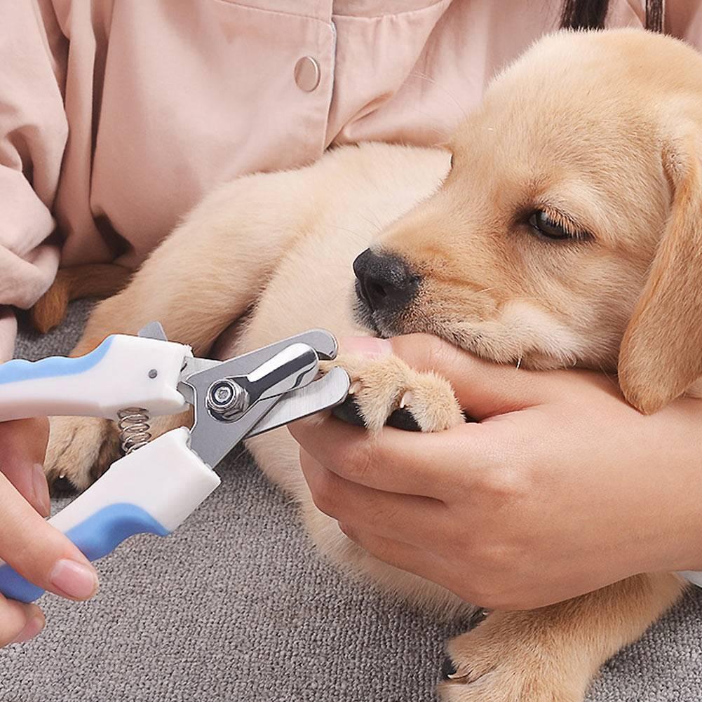 Рекомендации по уходу за шерстью собак гладкошерстных пород - интересное про собак