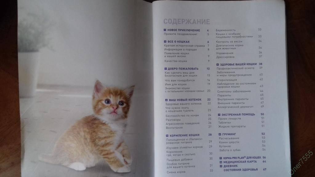 Что нужно для котенка - полный список
