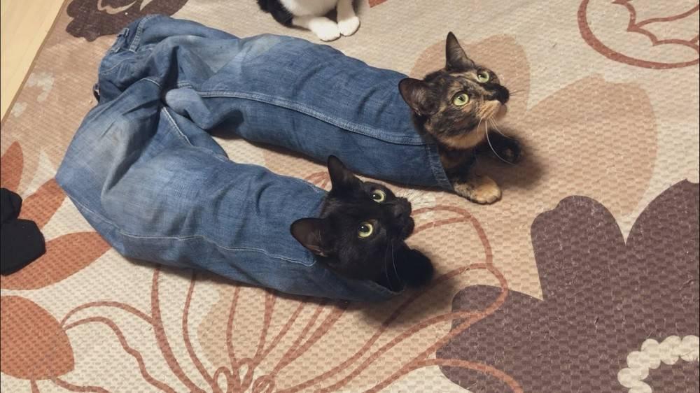 Ржачные истории про котов и кошечек - веселье без границ :)