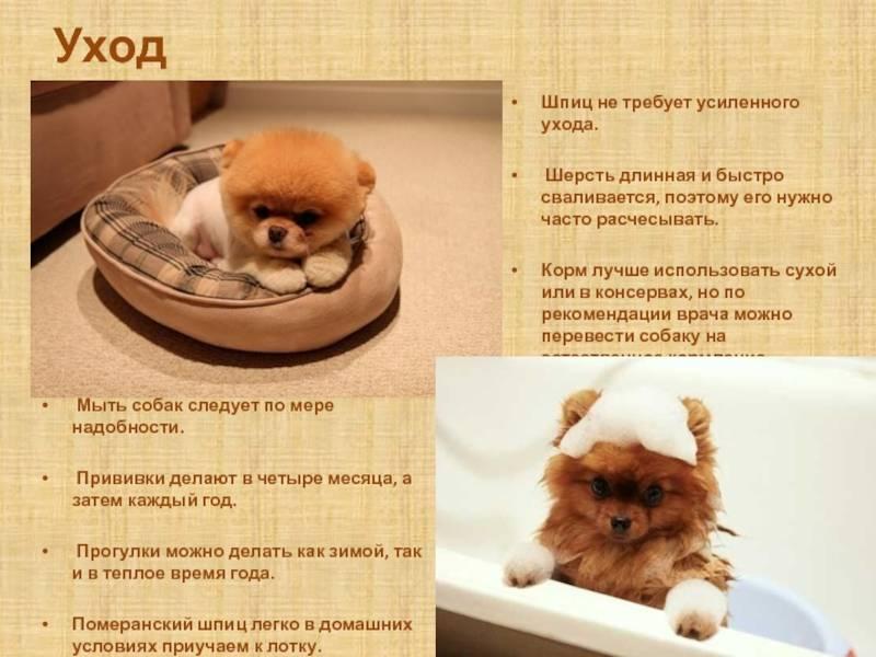 Как ухаживать за собаками? советы по уходу за щенками в домашних условиях, правильное уличное содержание. как надо ухаживать за шерстью?