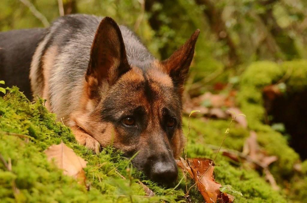 Почему собака отказывается от сухого корма?